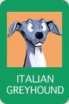 イタリアングレーハウンド_トイグループ
